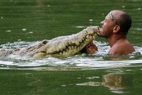 дружба человека с крокодилом